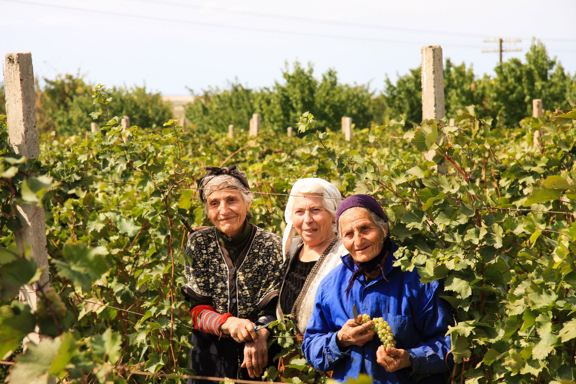 Areni Village, Areni Wineyards